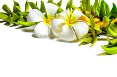 kwiatu przygotowania Zdjęcia Stock