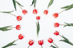 Kwiatu przygotowania czerwonych tulipanów odgórny widok obraz stock