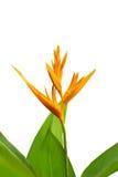kwiatu ptasi raj Fotografia Royalty Free