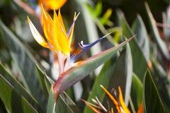 kwiatu ptasi raj Zdjęcie Royalty Free
