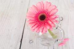 Kwiatu różowy gerbera w wazie Zdjęcia Stock