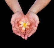 kwiatu ręk chwyt Obraz Stock