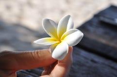 kwiatu ręki mienia biel Zdjęcia Stock