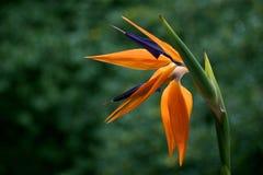 kwiatu raj Zdjęcie Royalty Free
