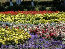 Kwiatu raj w mieście Zdjęcia Stock