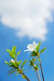 kwiatu ranek Fotografia Stock