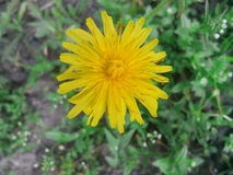 Kwiatu real Zdjęcia Stock