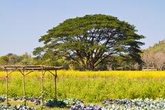kwiatu rośliny kolor żółty Zdjęcie Royalty Free