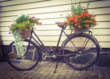 Kwiatu rower Obraz Stock