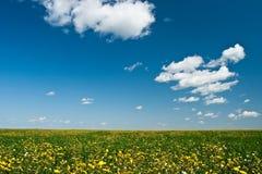 kwiatu segregujący kolor żółty obraz royalty free