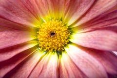 kwiatu serce Zdjęcia Royalty Free