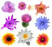Kwiatu Set Zdjęcia Royalty Free