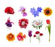 Kwiatu set Obrazy Stock
