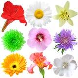 Kwiatu Set Zdjęcie Royalty Free