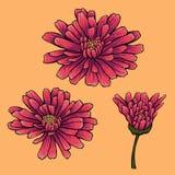Kwiatu set z trzy fiołkowymi kwiatami Zdjęcie Stock