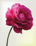 kwiatu siatki czerwień wzrastał Obrazy Stock