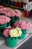 kwiatu sklep Zdjęcie Royalty Free