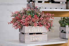 Kwiatu sklep dekoraci drewniany pudełko z czerwoną rośliną Fotografia Royalty Free