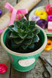 Kwiatu sklep - kaktus w zielonym garnku, kolorowi faborki, opakowania Obrazy Stock