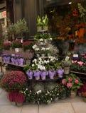 Kwiatu sklep w Wiedeń Fotografia Royalty Free
