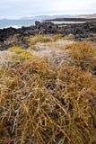 kwiatu stawu wody skały kamienia gałęziasty abstrakcjonistyczny niebo i summe Fotografia Stock