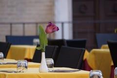 Kwiatu stołowy położenie Fotografia Royalty Free