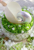 kwiatu storczykowi skorupy shellfish Obrazy Royalty Free