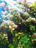 Kwiatu strażnik zdjęcie royalty free