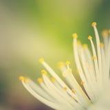 Kwiatu szczegół Zdjęcia Stock