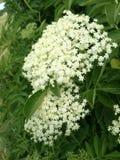 Kwiatu szczegół Obrazy Royalty Free