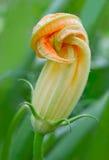 kwiatu szpik kostny warzywo Zdjęcia Stock