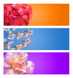 Kwiatu sztandar Zdjęcia Royalty Free