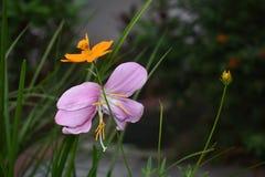 Kwiatu tła wizerunku natury miotacz kwiat obrazy royalty free