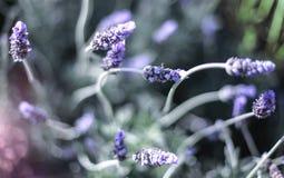 Kwiatu tło Zdjęcie Royalty Free