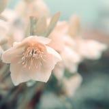 Kwiatu tło Obraz Stock