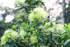 Kwiatu tło 260 Zdjęcia Stock