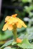 Kwiatu tło 316 Obraz Stock