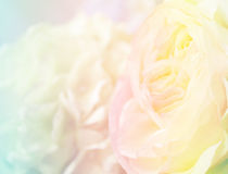 Kwiatu tło 39 Zdjęcia Stock