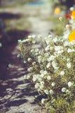 Kwiatu tło w lato ogródzie Zdjęcie Stock