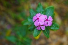 Kwiatu tła wizerunek Fotografia Stock
