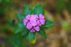 Kwiatu tła wizerunek Zdjęcie Royalty Free