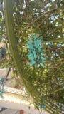 kwiatu tiger& x27; s cieki Obraz Royalty Free