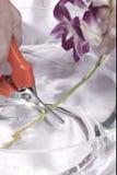 kwiatu tnący trzon Fotografia Royalty Free