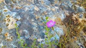 kwiatu trochę menchie Fotografia Royalty Free