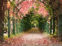 Kwiatu tunel Zdjęcie Royalty Free