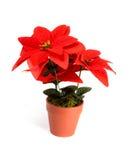 kwiatu wakacje Obraz Royalty Free