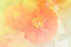 Kwiatu wymarzony tło Obraz Royalty Free