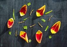 Kwiatu wzór płatek wiosny tulipany na czarnym drewnianym stołowym roczniku, Obrazy Royalty Free