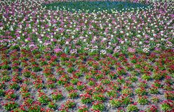 Kwiatu wzór wiosna Zdjęcia Stock