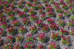 Kwiatu wzór wiosna Obraz Royalty Free